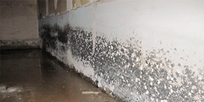 Mold Removal | Spray Systems Environmental